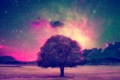 Fairy tree landscape Royalty Free Stock Photo