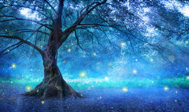 Fairy Tree. In Mystic Forest Stock Photo