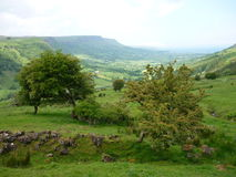 Fairy trees. In Northern Ireland, Glenariff - one of the Glens of Antrim in the backround royalty free stock photos