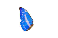 Fairy Wings. Closeup view of blue butterfly wings isolated on a white background Stock Images