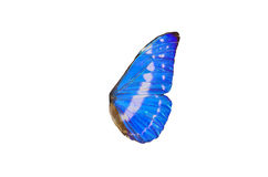 Fairy Wings. Closeup view of blue butterfly wings isolated on a white background Stock Photo