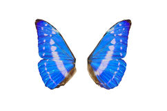 Fairy Wings. Closeup view of blue butterfly wings isolated on a white background Stock Image