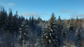 In a fairy winter forest. Aerial view HD stock video footage
