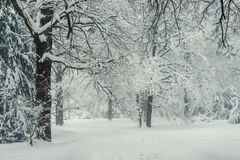 Fairy Winter Forest, Snow-covered Tree Branches. Beautiful Landscape stock photo