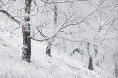 Fairy winter forest in the snow. stock images