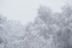 Fairy winter forest in the snow. Winter time. Heavy snowfall Stock Photo