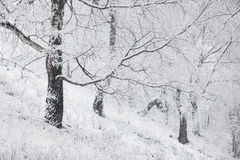 Fairy winter forest in the snow. Winter time. Heavy snowfall Stock Photography
