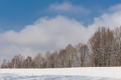 Fairy winter forest in the snow. Winter time. Heavy winter snow fall. Winter trees in the snow. Beautiful winter landscape with sn Royalty Free Stock Image