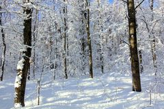 Fairy winter forest. Trees in the snow. Sunny frosty day. White winter background.  stock photo