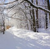 Fairy winter forest. Trees in the snow. Sunny frosty day. White winter background.  stock image