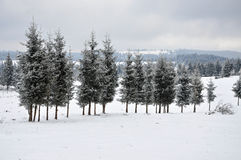 Fairy winter landscape with fir trees Royalty Free Stock Image