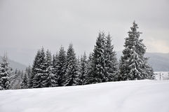 Fairy winter landscape with fir trees Stock Image