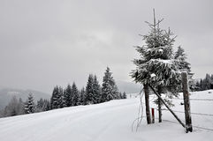 Fairy winter landscape with fir trees Stock Images