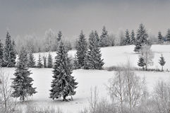 Fairy winter landscape with fir trees Stock Photography