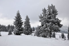 Fairy winter landscape with fir trees Royalty Free Stock Photos