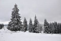Fairy winter landscape with fir trees Stock Photos