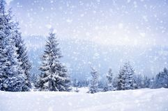 Fairy winter landscape with fir trees. And snowfall. Christmas greetings concept Royalty Free Stock Photography