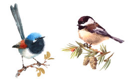 Fairy Wren and Chickadee Birds Watercolor Illustration Set Hand Drawn