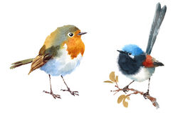 Fairy Wren and Robin Birds Watercolor Illustration Set Hand Drawn Stock Images
