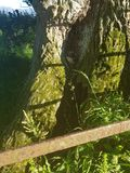 Fairyhouse zdjęcie stock