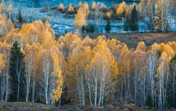 Fairyland autumn birch forest stock photos