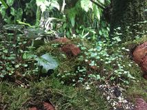Fairyland forest, micro-garden of green foliage. Fairyland forest, miniature micro-garden of green foliage. Mixed small and larger green leaves, little white Stock Photography