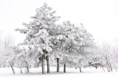 Fairytail di inverno Fotografie Stock