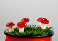 Fairytale background with agaric and moss Stock Image
