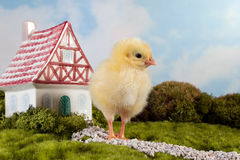 Fairytale chick Stock Images