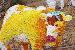 Fairytale cow. Made of chrysanthemum flowers Royalty Free Stock Image