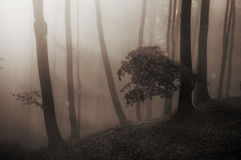 Fairytale enchanted mysterious forest with fog Royalty Free Stock Photo