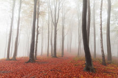 Fairytale foggy forest and trail through the leaves Royalty Free Stock Photography