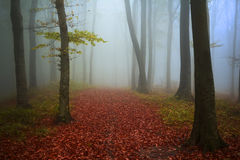 Fairytale foggy forest and trail through the red leaves Stock Photography