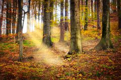 Fairytale Forest Stock Photography