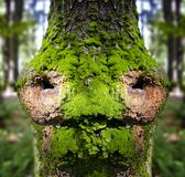 Fairytale forest, face of the bark Stock Photography