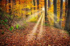 Fairytale Forest. Deciduous trees in autumn with sunbeam royalty free stock photos