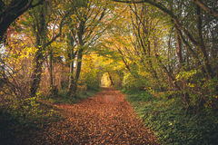 Fairytale forest in the fall. With colorful trees in autumn colors covering a forest trail with autumn leaves Stock Image