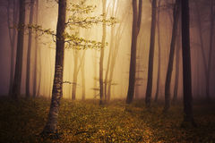 Fairytale forest during a foggy autumn day Royalty Free Stock Images