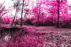 Fairytale Forest. An infrared look makes this forest look like it is from out of a fairytale Stock Photo
