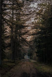 Fairytale Forest. A fairytale Forest of the light on a bad day Royalty Free Stock Photography