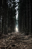 Fairytale Forest. A fairytale Forest of the light on a bad day Royalty Free Stock Photo