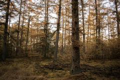 Fairytale Forest. A fairytale Forest of the light on a bad day Royalty Free Stock Image