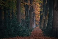 Fairytale forest with with tall trees and colorful leaves on the ground Stock Photography