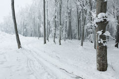Fairytale forest during winter in mist Royalty Free Stock Images