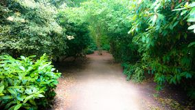 Fairytale forrest path under the sun royalty free stock images