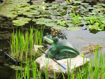 Fairytale frog in the pond Royalty Free Stock Image