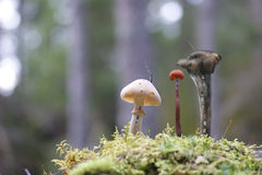 Fairytale fungus city. Fantasy, fairytale fungus high-rise houses in the forest Royalty Free Stock Photo