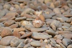 Fairytale land pumpkin on rocks tiny animals Stock Photos