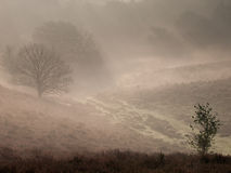 Fairytale landscape. Misty fairytale landscape in National Park Veluwezoom Stock Image
