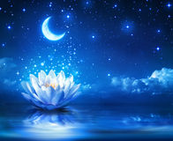 Fairytale and magic background. Waterlily and moon in starry night - magic background Stock Image